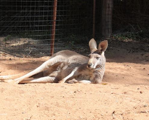 Perth Zoo, Australia September 2015