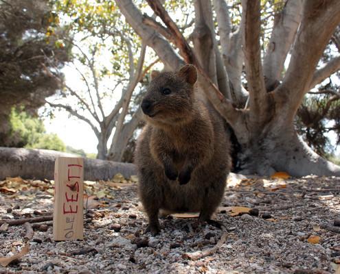 Rottnest Island ja muud seiklused Austraalias